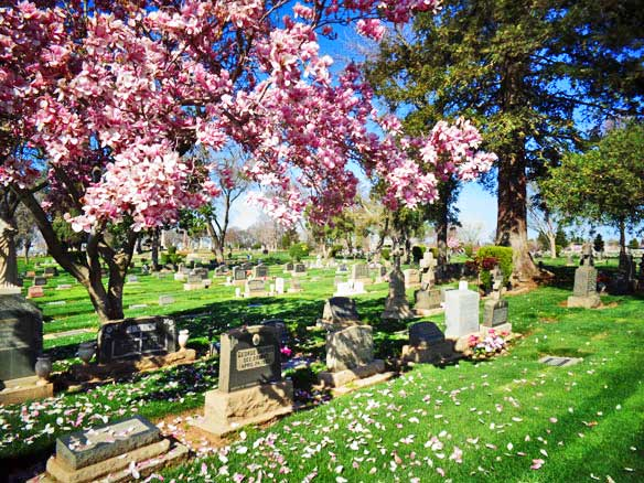 flowers & headstones